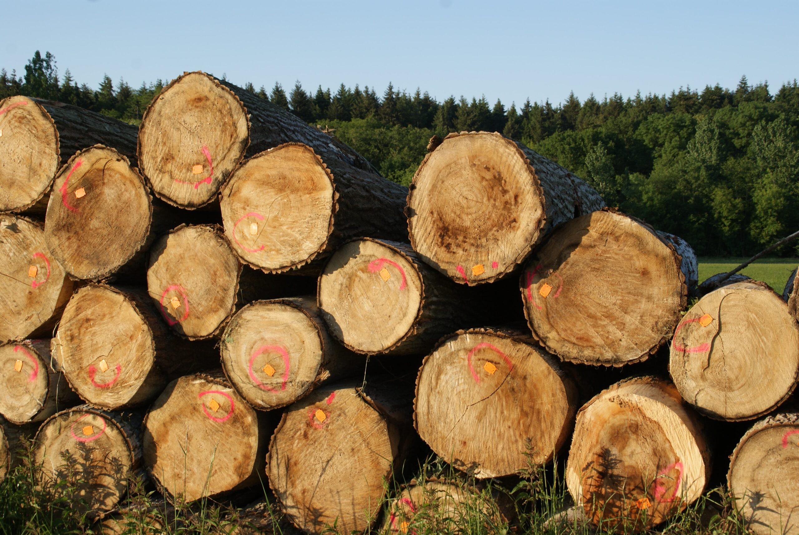 ウッドショックの影響を受ける木材