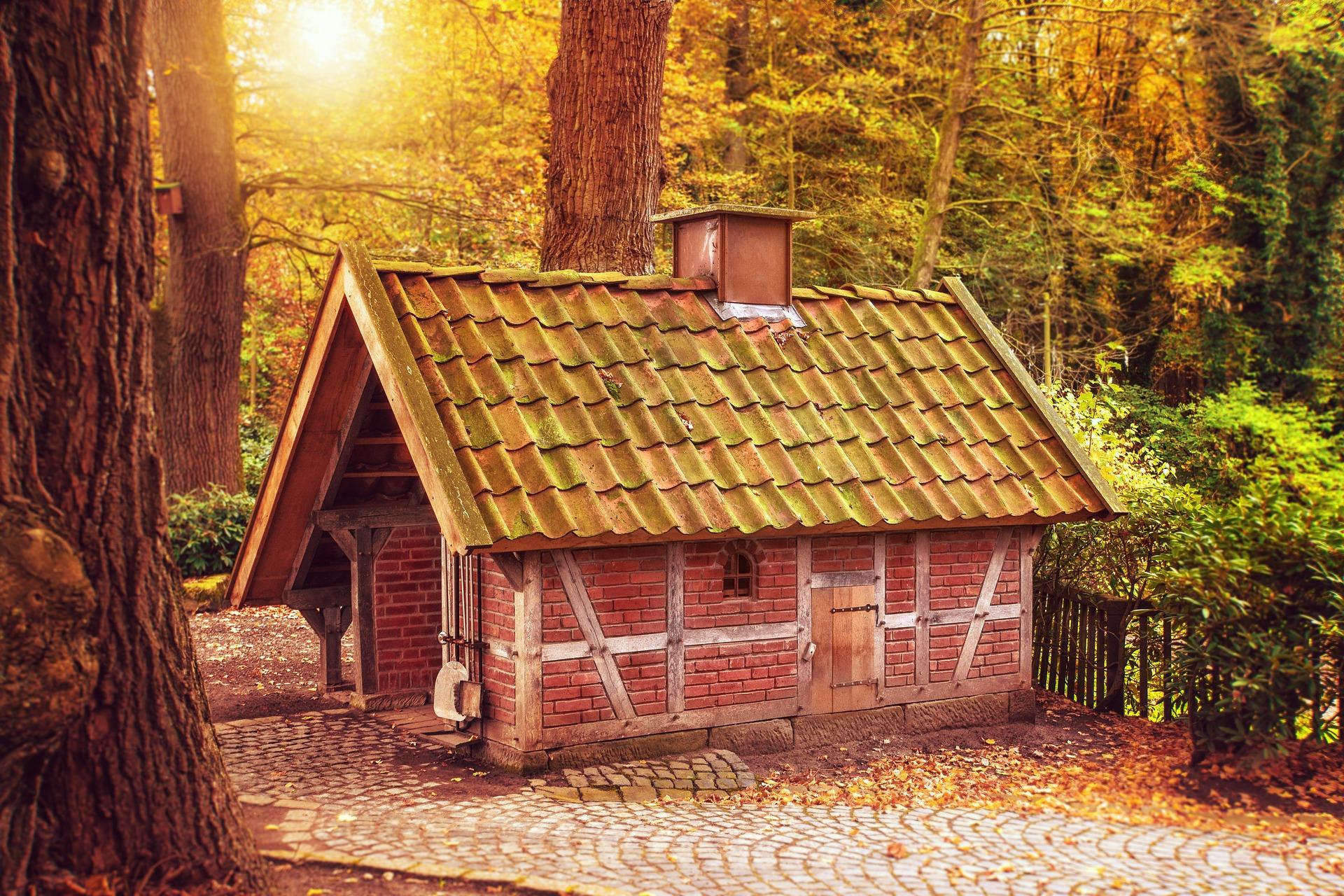 森の中でオープンハウス
